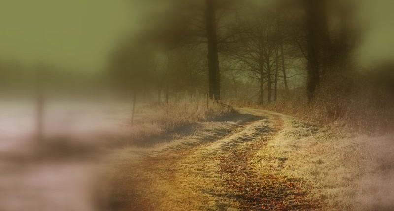 photo-photo-paysage-flou-3